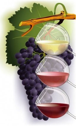 wine_and_grapes_vector_155327